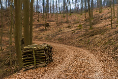 A Pile Of Wood (Photograaff) Tags: wood tree nature trekking germany way forrest hiking path stack eifel pile naturepark traumpfad frstersteig