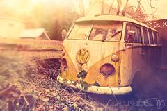 1966 Split-Window VW Bus (Danielle Denham-Skinner) Tags: abandoned rotting oregon volkswagen decay 1966 retro oldcar woodstock abandonment fauxlomo vintagecars vwbus deadhead oldvan hippievan dasauto vintagecolors doubleslugbug