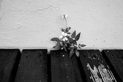 Bouquet (Corina Freyre Photography) Tags: bw nature humanvsnature