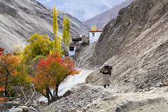 Themisang  Village (Irene Becker) Tags: autumn india mountain man countryside oldman climbing himalaya ladakh imagesofindia northindia jammukashmir incredibleindia indianimages irenebecker