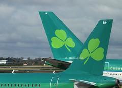 Aer Lingus tails (Flame1958) Tags: airbus dub aerlingus dublinairport 2016 0416 eidw aerlingusairbus 290416