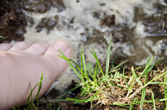 18:52 (phixated) Tags: light sun macro feet nature water field project puddle photography photo nikon toes photographer dof mud skin pale dirt weeks depth 52 52weeks 52weeksproject 52weeksofphotography 52weeks2016