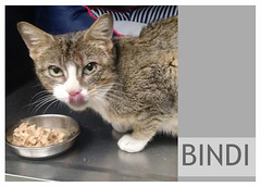 Bindi-05 (Ali Crehan) Tags: cat may shelter 2016