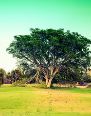 Broken But Ain't Falling !!! (Hazem Hafez) Tags: sunset sky tree green gardens stems cracks challenge reselience