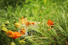 nature and flowers (turquoisedeer) Tags: flowers tree green nature leaves blossom outdoor insects bloom apricot