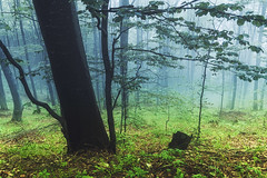 The Freshest Time of the Year (Dankish) Tags: wood mist mountain west fog forest spring mood moody may spooky mai bulgaria prolet rodopi rhodope rhodopes zapadni rodope