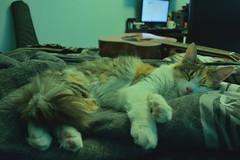 Breathe, breathe in the air.. (siinestesiia) Tags: sleeping beauty cat bed bedroom kitten guitar kitty cutie gata chill gatita durmiendo descansando