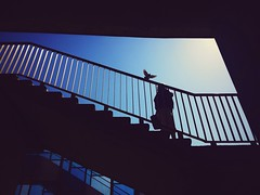 street city blue sky woman color bird silhouette mobile... (Photo: ewitsoe on Flickr)