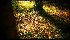 160510-7994-XM1.jpg (hopeless128) Tags: france tree woods eurotrip fr 2016 nanteuilenvalle aquitainelimousinpoitoucharentes aquitainelimousinpoitoucharen