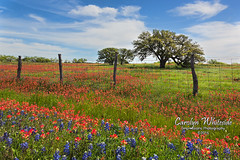 Ranch Flowers