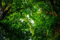The canopy (Arutemu) Tags: light shadow nature lens zoom sony   manualfocus     asanuma a7r  sonya7r ilcea7r