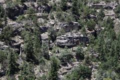 Walnut Canyon (twm1340) Tags: monument forest walnut az canyon national flagstaff nm coconino
