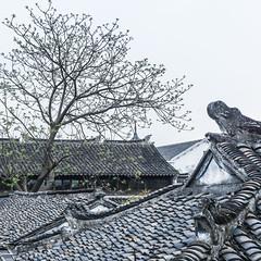 DSC00641 (Fibi's) Tags: china suzhou shanghai april hangzhou jiangnan 2016 trungquoc thuonghai tochau tuannguyen hangchau giangnam fibiphoto nguyenngoctuan fibitravel thang04