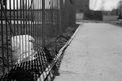 untitled (Anton Zabermach) Tags: blackandwhite bw film analog 35mm fence dof bokeh nikkor ilford fp4 nikonfe2 selfdeveloped microphen 50mmf18ai