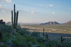 Saguaro - Picacho Peak State Park - Pinal County - Arizona - 25 October 2014 (goatlockerguns) Tags: park county arizona usa mountains southwest west nature view desert natural state unitedstatesofamerica peak western saguaro picacho pinal
