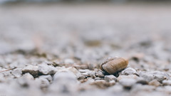 Watch your step (Quentin MLC) Tags: white france cute ex up rock way shoe 50mm soft close little pentax sweet bokeh path sleep walk f14 watch shell snail sigma crisp step your hide le week slime delicate scallop fragile crunch dg protect aven frail k3 farfadet hsm