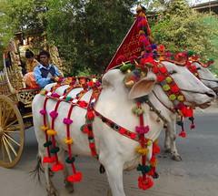 Bagan DSC07027 Myanmar