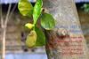 Shovo noboborsho 1422