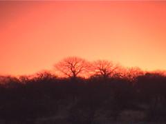 An Etosha Sunset