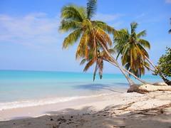 Port-Salut, Haiti (SBPR) Tags: ep3 olympus caribbean caribe haiti ayiti uncommoncaribbean travel westindies beach caribbeansea palm palmtree creole kreyol vacation holiday