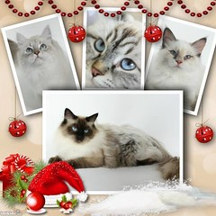 4 (216) (CATS - DOGS) Tags: pet cat kitten quote kittens brochures brochure kedi afi yabrukedi