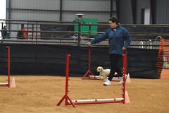 agility259 (jaimekay16) Tags: dog training austin agility k9 xpress nadac k9x