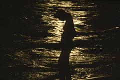 (Armin Schuhmann) Tags: 1978 nikkormat ocean sunset portrait sun sunlight color film water analog 35mm vintage lens prime haze nikon focus vermont waves kodak slide dia telephoto positive kodachrome analogue nikkor f28 ai argentique kodachrome64 135mm ft3 diapo transparancy 135mmf28ai 64asa kodakkodachrome64 l37 135mmnikkorf28ai nikonl37haze silhouette scan filmscan filmisnotdead analogic believeinfilm filmphotography manual selfdeveloped ishootfilm filmphoto shootfilm 64 buyfilmnotmegapixels analogo pelicula filme пленка longlivefilm northeast vintagecamera vintagelens analogico analogica фотопленка