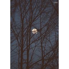 هوا یکم گرگ و میشه  بوی خون پخشه  صدای کلاغا تا پشت کوه رفته ... #nature #dark #darkside #moonlight #moon #bloodmoon #blood #forest #darkforest #afterlight #scare #scareforest #lumia #lumia920 #winphone #winphoneir #winphonography #axphone #200mmlens #lum (Ashkan_a2) Tags: square 200 squareformat 200mmlens iphoneography winphone instagramapp uploaded:by=instagram lumia920 foursquare:venue=5216193f11d228464e7db165