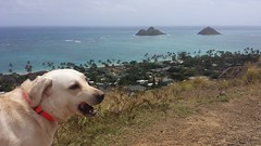 Kona Cooling Off (XJCreations) Tags: hawaii oahu lanikai bunkers kaiwa xjcreations