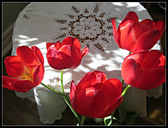 Tulip Splendor & Lace (bigbrowneyez) Tags: flowers light red sunlight art nature beautiful sunshine petals shiny pretty dof tulips lace embroidery 5 gorgeous blossoms victorian natura romance fresh special delight round romantic lovely fiori sheen rosso belli artful delightful lightshade mylivingroom bellissimi satiny tulipana tulipsplendorlace