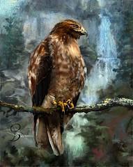Hawk (Riccilynn) Tags: birds hawk or falls painter multanomia