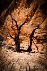 Shadows and Sandstone (thetrekplanner) Tags: shadow orange cliff tree utah nationalpark sandstone canyonlandsnationalpark