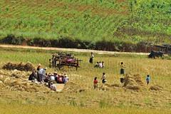 Myanmar - Pindaya Hills (kini_b) Tags: field rice farmers burma myanmar birmania