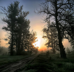 sunrise (MarcelXYZ) Tags: morning trees mist nature fog sunrise canon drohiczyn cesarz marcelxyz