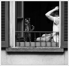 Masterplan (baerophoto) Tags: street blackandwhite window cat person schwarzweis