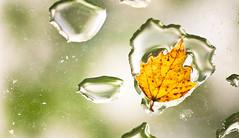 Dirty Glass & Leaf Raindrops (Orbmiser) Tags: glass raindrops leaf nikon d90 55200vr portland oregon