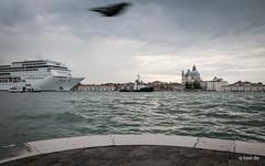 Venice Cruise. (Q-BEE) Tags: city cruise family venice urban italy boat holidays italia ship urlaub familie cruising veneto venzia venetien cavallinotreporti