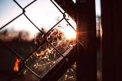 fade (ewitsoe) Tags: sunset test sun night canon fence evening spring warm mood mesh dusk spiderweb dream sunny memory lensflare flare chickenwire ewitsoe eos6d28mm