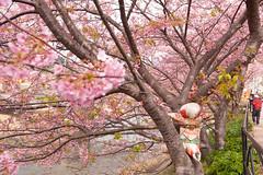 DS7_1811.jpg (d3_plus) Tags: street sea sky plant flower nature car rain japan drive spring scenery cloudy wideangle rainy  cherryblossom  sakura   shizuoka    touring  izu  kawasaki  prunus superwideangle  rapeblossoms kawazu     sakurafestival       a05   kawazuzakura  1735mmf284 tamronspaf1735mmf284dildasphericalif tamronspaf1735mmf284dildaspherical d700  nikond700 tamronspaf1735mmf284dild tamronspaf1735mmf284 kawazucherryblossom tamronspaf1735mmf284dildasphericalifmodela05