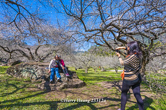 Harry_23312a,,,,,,,,,,,,,,,,,,,,Plum,Plum Tree,Tree,Fruit,Farm (HarryTaiwan) Tags: tree fruit nikon farm plum taiwan     plumtree  d800                    harryhuang  hgf78354ms35hinetnet adobergb
