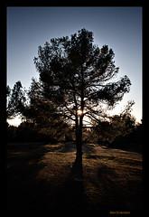 rbol de tarde / Afternoon tree (dcamon) Tags: winter tree arbor granada invierno davehill
