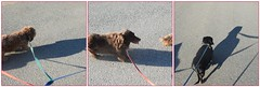 So Slow (Tobyotter) Tags: frank fdsflickrtoys mosaic dachshund link jimmydean