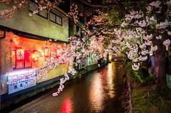 sakura '15 - cherry blossoms #2 (Kiyamachi street, Kyoto) (Marser) Tags: flower japan cherry kyoto raw   sakura gr ricohgr lightroom kiyamachi  grd