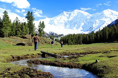 Killer view of Killer Mountain (The_Mountain_Man_) Tags: meadows fairy nangaparbat killermountain fairymeadows concordians adeelathar mostbeautifultrek