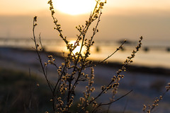 Early Spring (Hkan Dahlstrm) Tags: sunset sky orange beach photography se skne sweden f56 uncropped malm ribban ribersborg 2015 skneln fridhem canoneos100d sek ribersborgsstranden efs1855mmf3556isstm 1218032015173555