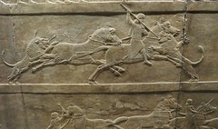 Nimrud Lion hunt (tom_2014) Tags: uk england london art stone museum ancient asia britain stonework iraq lion middleeast carving frieze collection relief britishmuseum civilisation iraqi mesopotamia hunt lionhunt assyria assyrian ancientart nimud