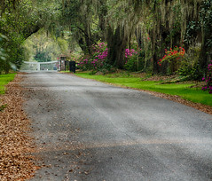 Magnolia Plantation Entrance Road-2 (agilityfoot) Tags: sc charleston gdf magnoliaplantation 2015