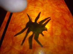 20150401_Április_210811 (emzepe) Tags: lamp spider hungary day joke april utca este 37 otthon fools pók ungarn tavasz practical 2015 hongrie napja április lámpa aranyos vicces vicc hódmezővásárhely nappali tréfa bercsényi nálunk lóránt humoros áprilisi bolondok