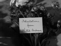 Flowers (annacarvergay) Tags: handwriting calligraphy namethatfilm unnamed cursive bachelorsbuttons