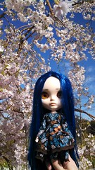 Remy makes those cherry blossoms look good ;)